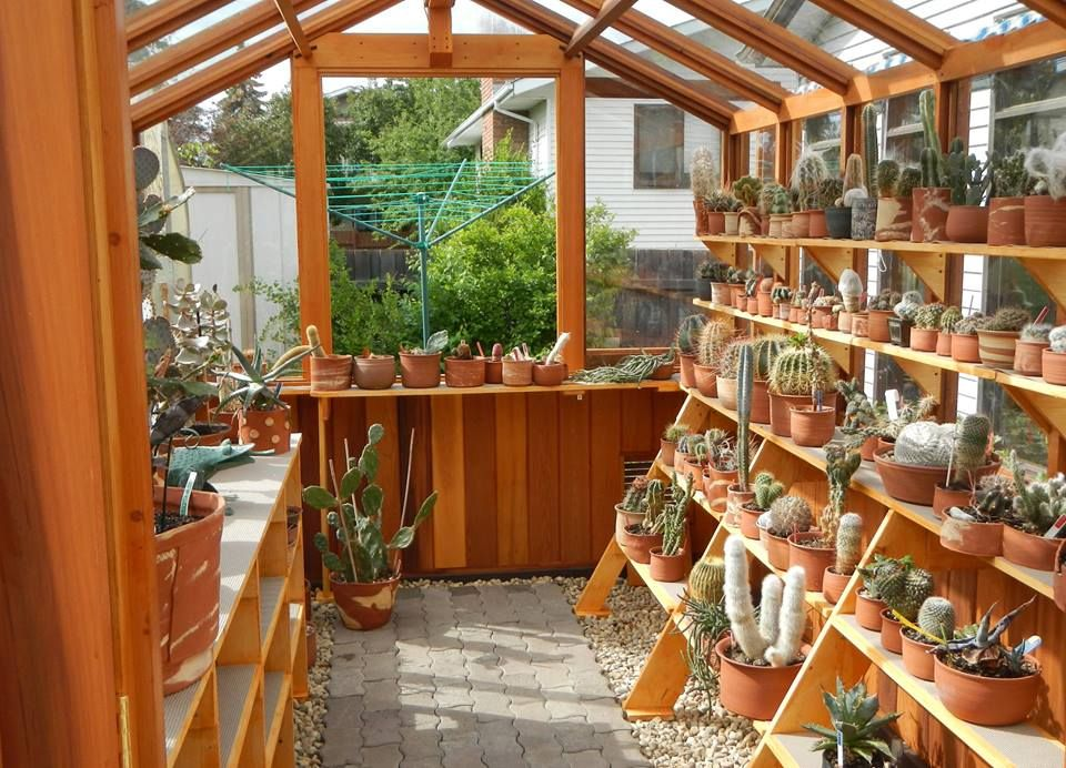 Cedar built greenhouses cedar greenhouse benches for Inexpensive greenhouse shelving wood