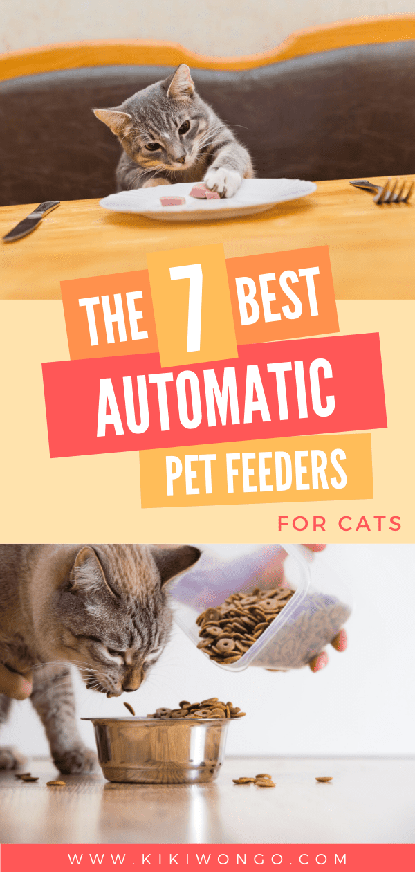 Best Automatic Pet Feeder For Cats In 2020 Pet Feeder Cats Pets