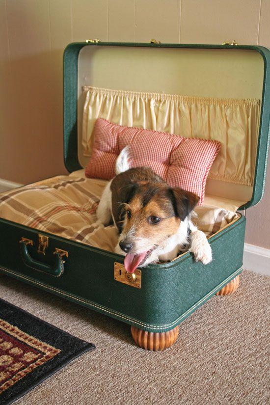 Make A Simple Suitcase Pet Bed Diy Dog Bed Pallet Dog Beds