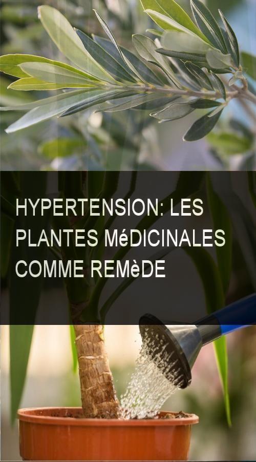 hypertension les plantes m dicinales comme rem de. Black Bedroom Furniture Sets. Home Design Ideas