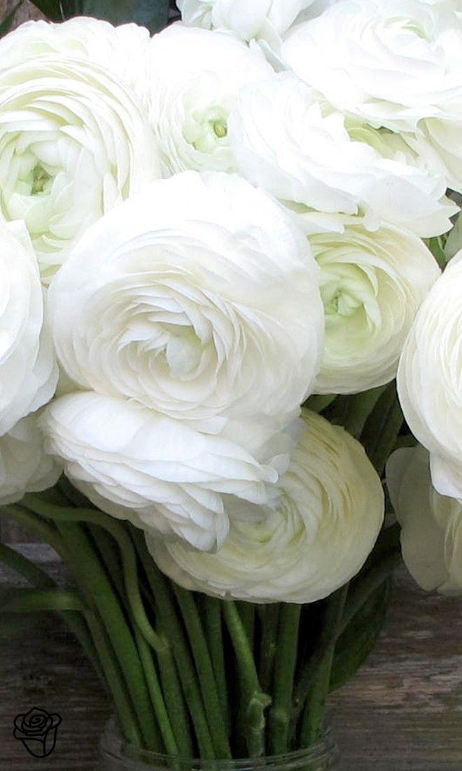 Get Expert Gardening Tips On The Ranunculus Flower How Much Sun Shade Water And Care Does It Need Read On To In 2020 Flowers Photography Ranunculus Flowers Flowers