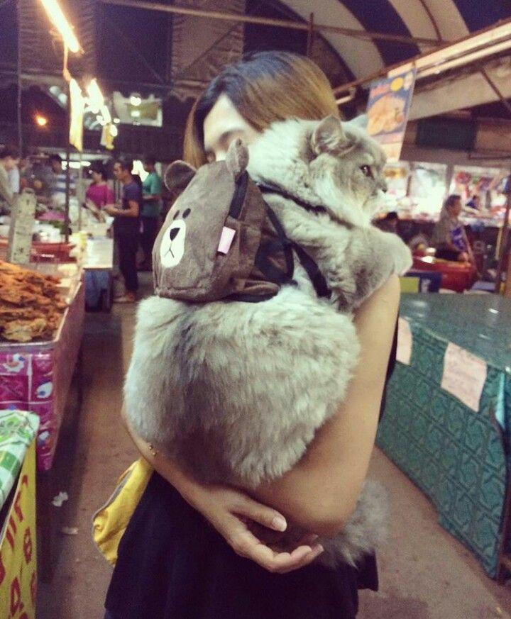 Cat wearing a backpack Cute cats, Crazy cats, Cats