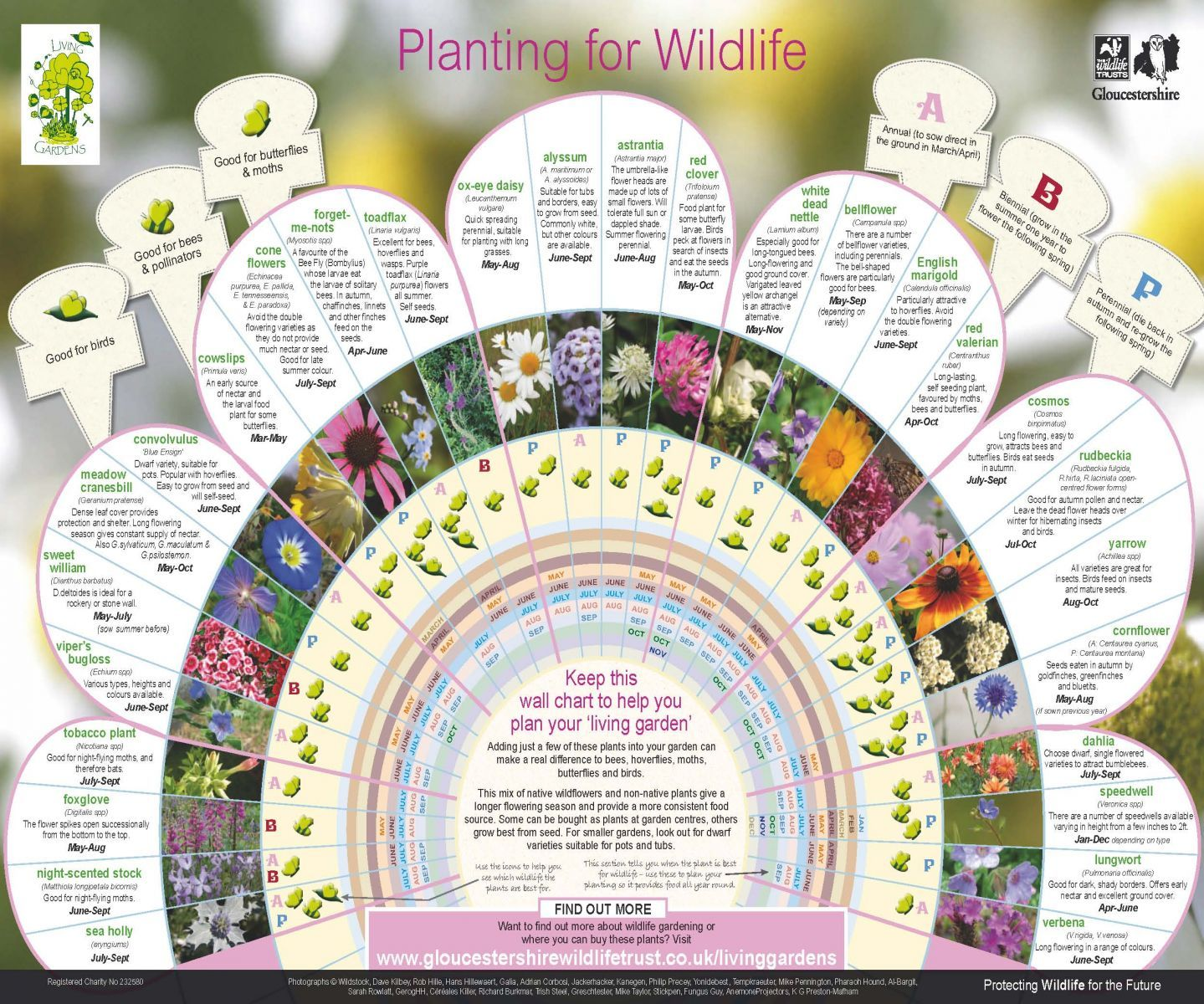 Wildlife Gardening | Gloucestershire Wildlife Trust