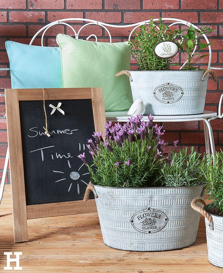 Zinkwannen mit duftendem Lavendel und Kräutern bepflanzt ...