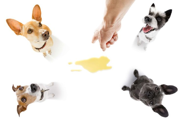 What Age Should A Puppy Be Toilet Trained Puppy Training Guide