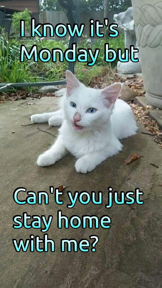Boothedeafkitty Fun Cute Cat Kitten Meme Funny Cats Kitten Meeting People