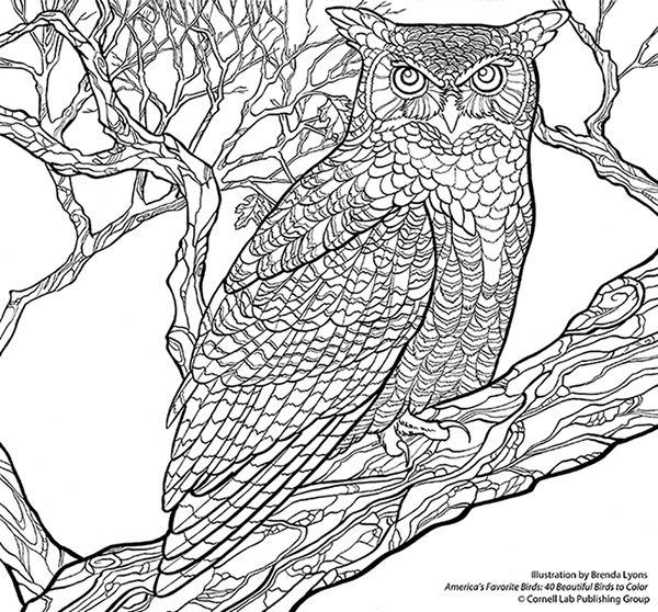 Download Your Free Great Horned Owl Coloring Page