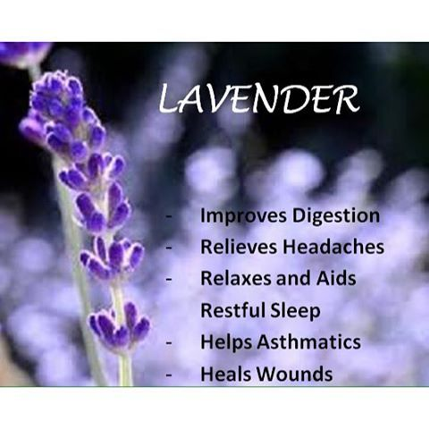 Even more reasons to Love lavender. Our Antioxidant Juice WIND is packed with the power of blueberries.  Lavender: is naturally antiseptic and can be used to cleanse the body naturally as well as cut swelling with its anti-inflammatory properties. Lavender is also known to lower blood pressure and slow the heart rate to calm the body down naturally.