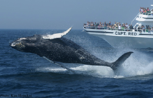 Best Whale Tours For Kids Maine