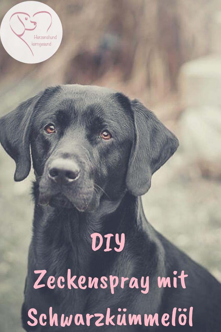 Zeckenspray Mit Schwarzkummelol Selbst Herstellen Zeckenmittel Zeckenschutz Und Hunde