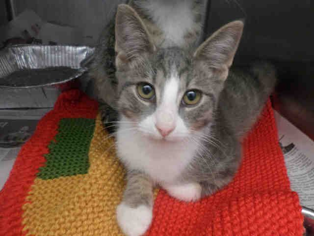 Webster Pittsburgh Pa Petharbor Com Animal Shelter Adopt A Pet Dogs Cats Puppies Kittens Humane Society Spca Animal Shelter Animals Humane Society