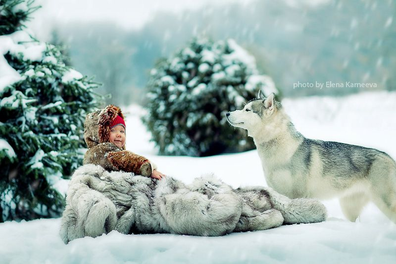 Husky and Baby in Fur Blanket