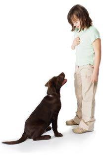 dog-command