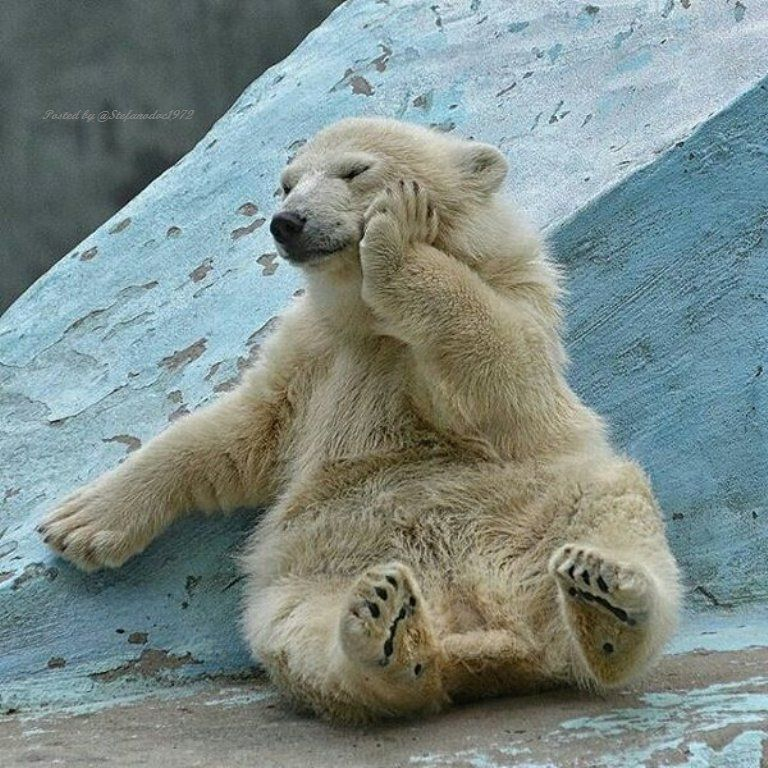 "Stefano Savino Magi on Twitter: ""Wake up bear ... it's  Monday today ! https://t.co/2FIvsPYMQ5"""