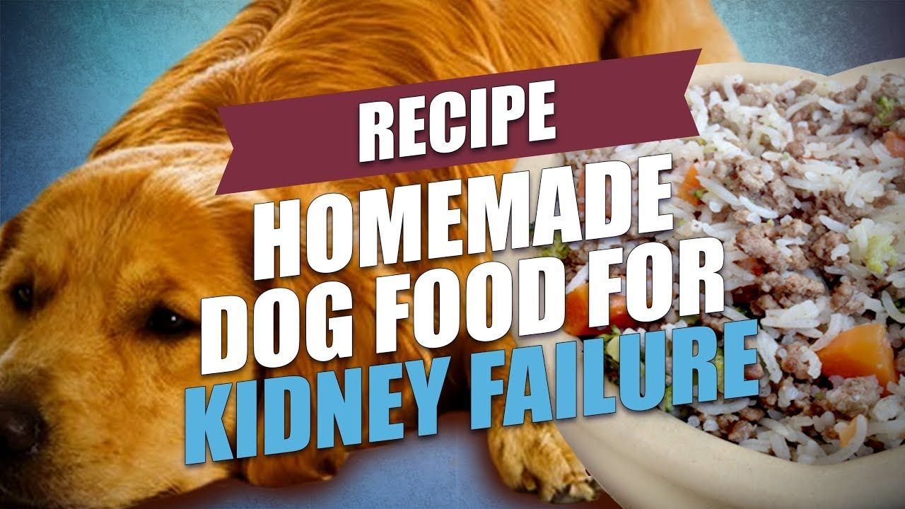 Homemade dog food for kidney failure recipe healthy and