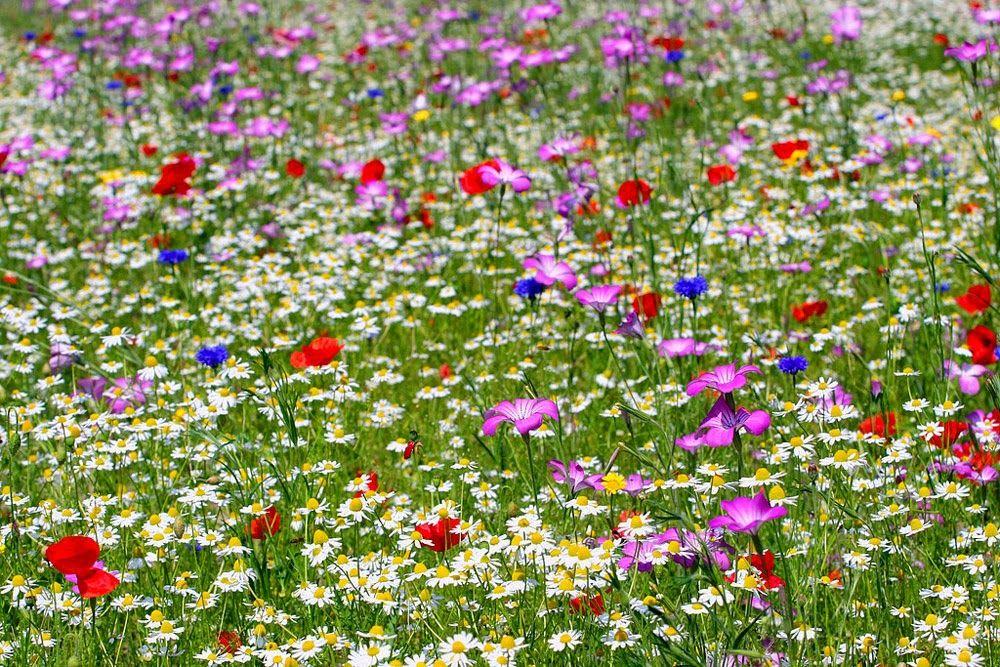 Arte Y Jardiner A Dise O De Jardines Jardines Secos De