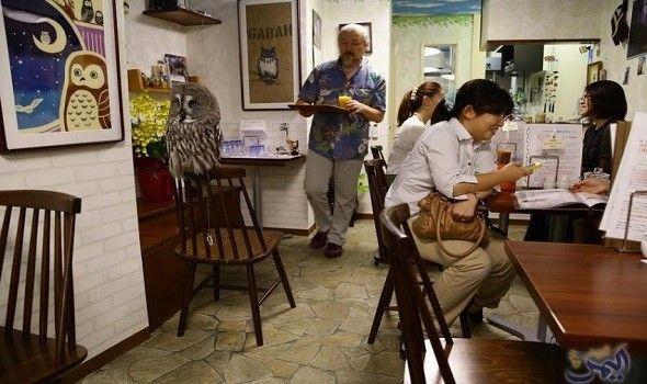 مقهى في طوكيو يمنحك جلسة ملاطفة مع بومة Japan Scenes Favorite Places