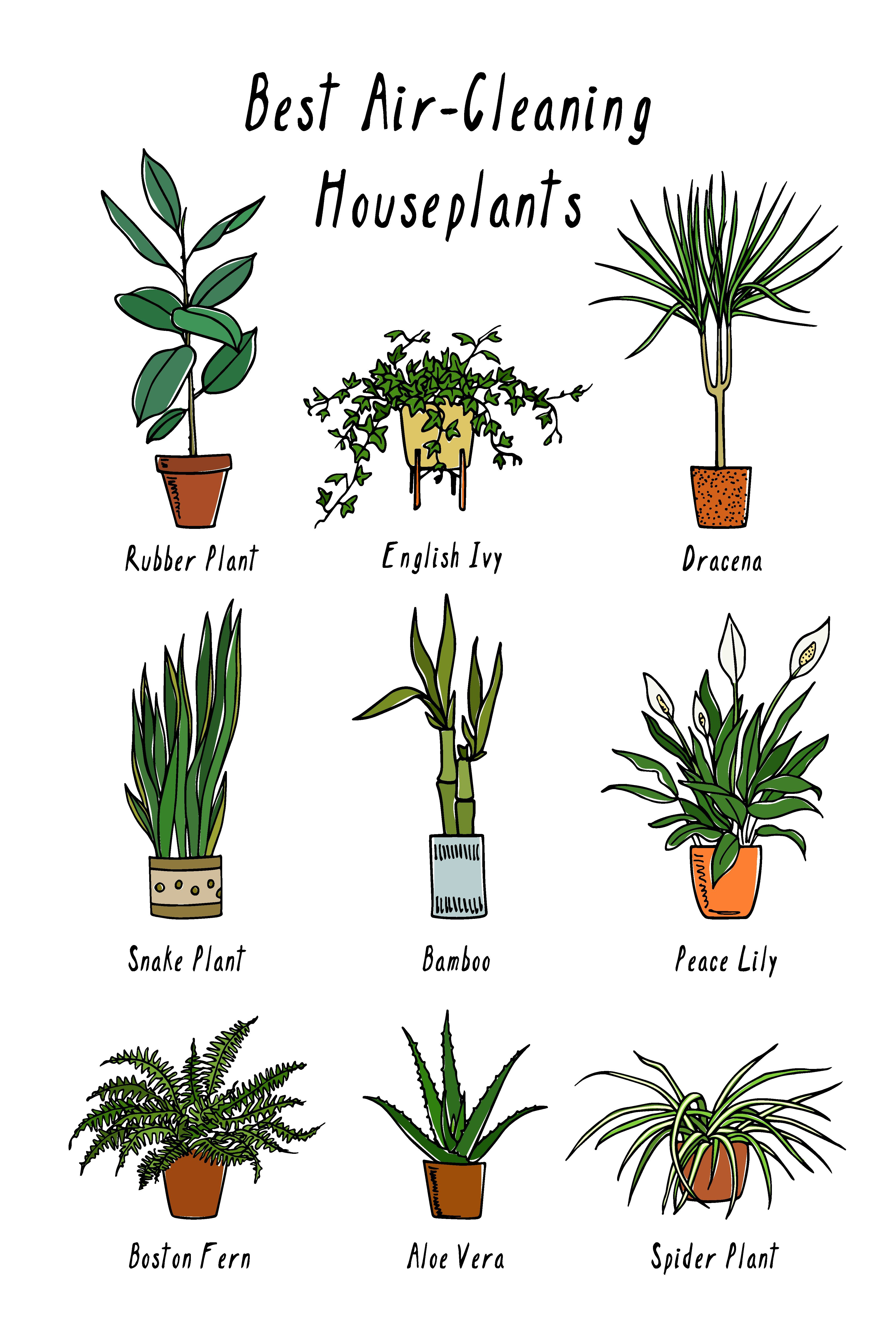 Plants That Help Purify Clean The Air Air Cleaning Plants