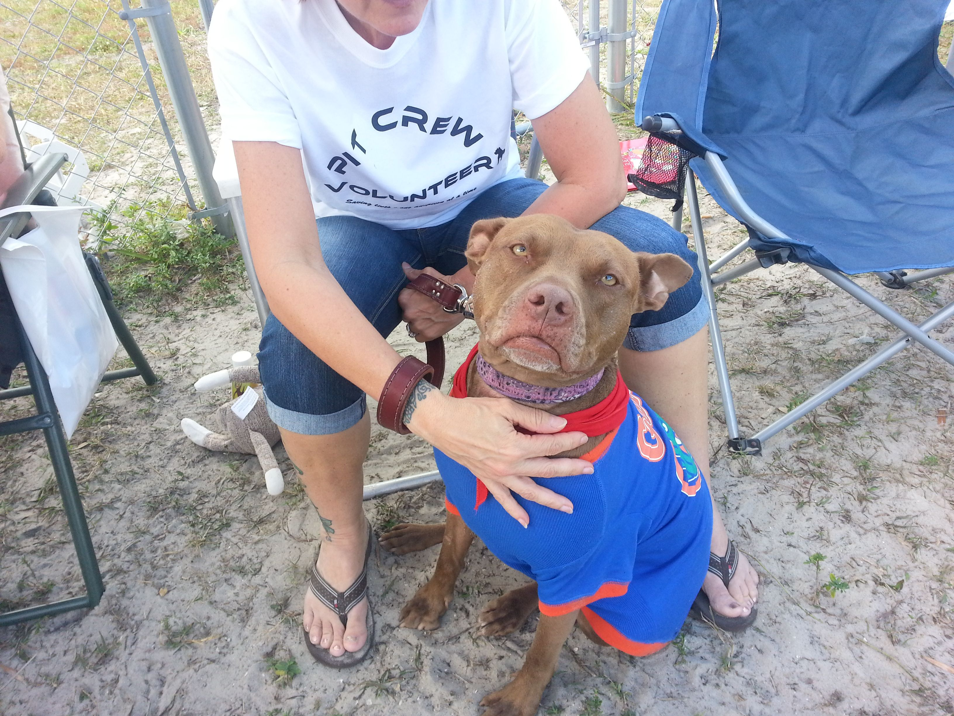 Pin on The Pit Bull Crew DOG RESCUE Who we are