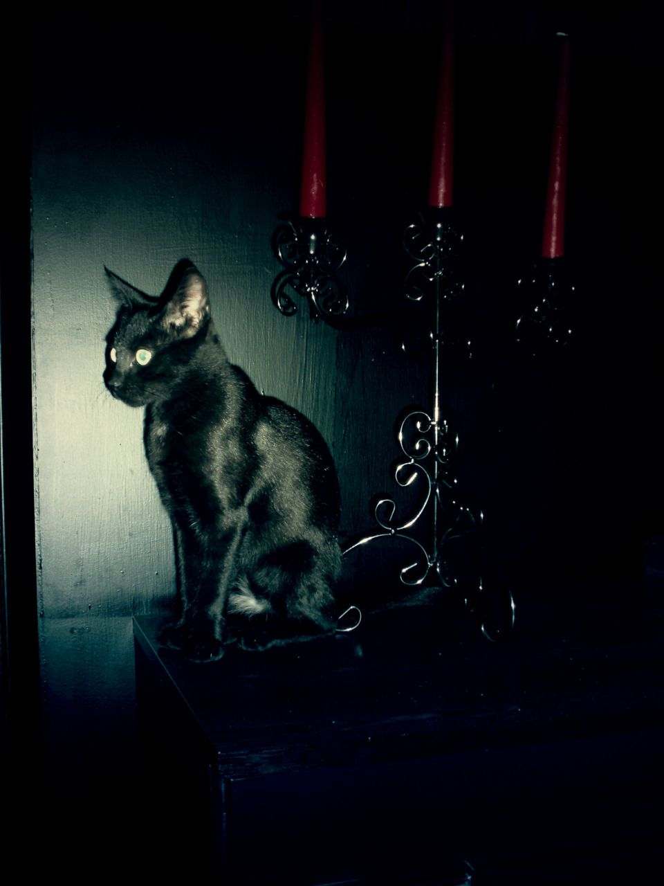 as kitten as a cat