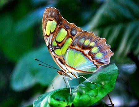 Макро фотографии бабочек.   Макро фотографии, Фотографии