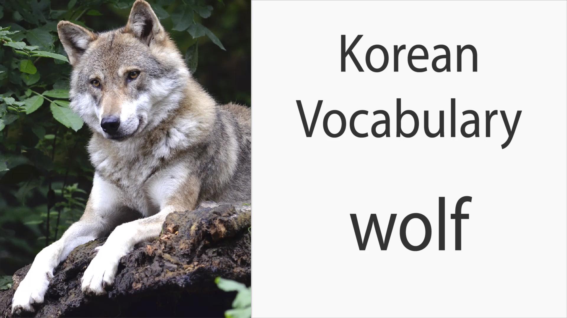 "How to say ""Wolf"" in Korean [Video]  Korean language, Learn korea, Learn  korean"