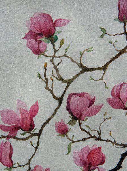 Has A Magnolia Yunzhongshan People Three Miao Original Flowers Watercolor Illustration Graffiti Kingd Graffiti Flowers Flower Painting Flower Drawing