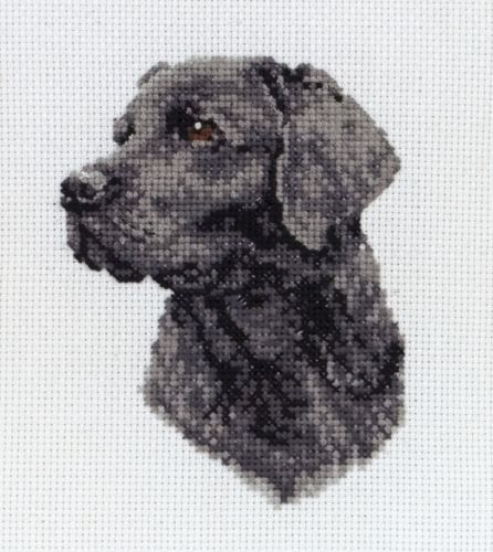 Weimaraner Dog Portrait Counted Cross Stitch Pattern