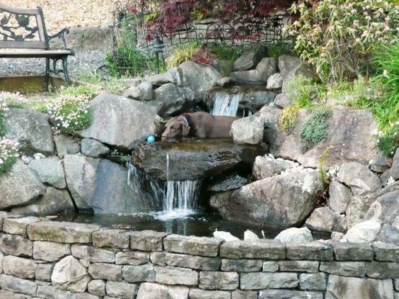 Bachlauf mit Gartenteich im Kleingarten anlegen Teiche Pinterest
