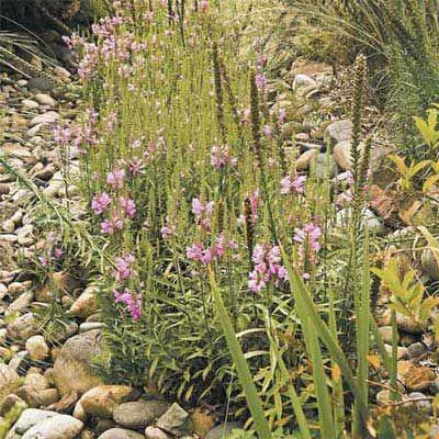 Best Ways To Deal With Storm Water Rain Garden Plants