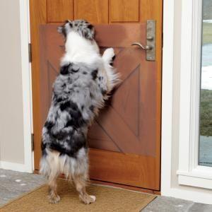 Door Shield Dog Scratch Guard Create A Dog Friendly Home