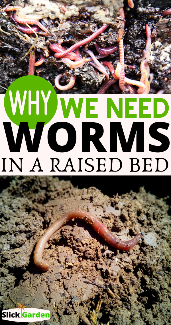 Everything You Need To Know About Adding Worms In Your Raised Bed