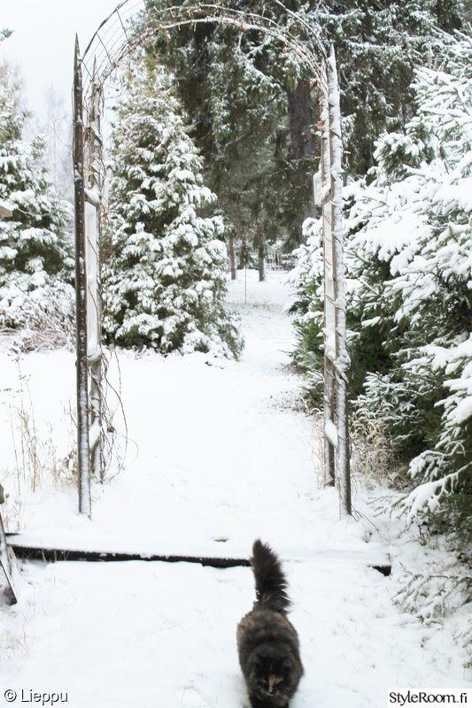 talvi,puutarha,piha,kissa,lumi