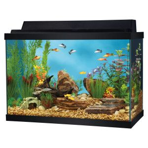 Top fin 20 gallon aquarium starter kit includes aquarium for 10 gallon fish tank heater