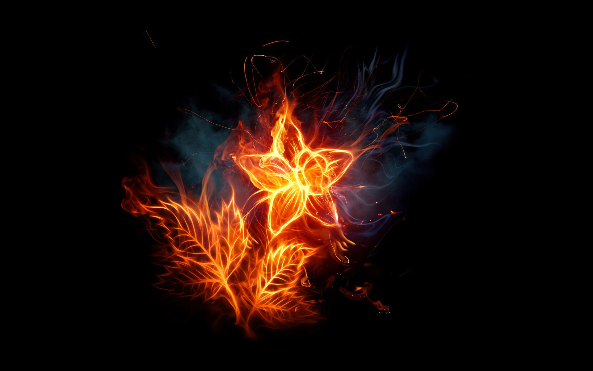 Hd wallpapers fiery flowers fire and flame pinterest hd wallpaper hd wallpapers fiery flowers thecheapjerseys Gallery