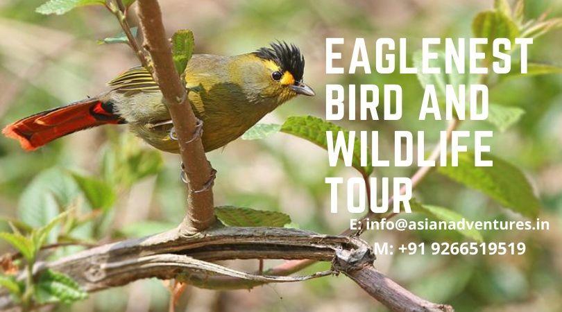 eaglenest wildlife sanctuary in 2020 Wildlife tour