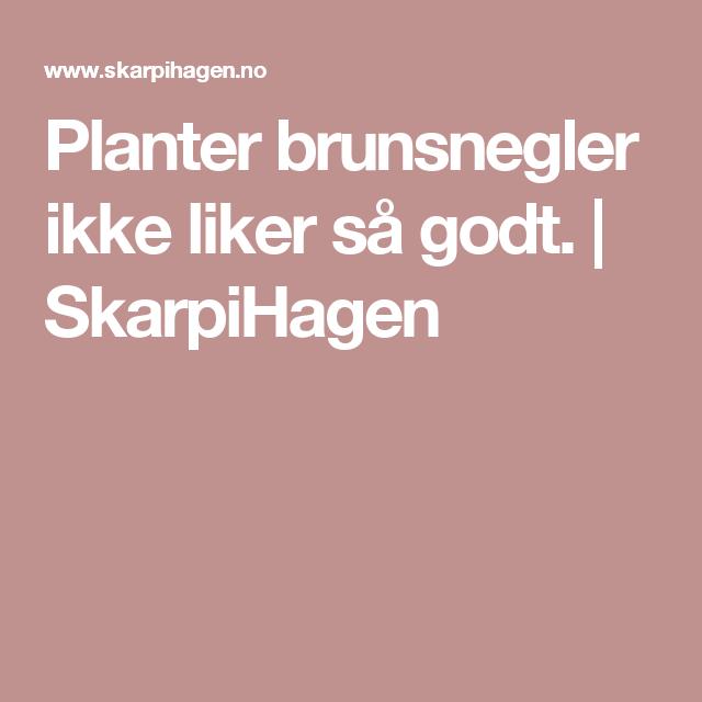 Planter brunsnegler ikke liker så godt. | SkarpiHagen
