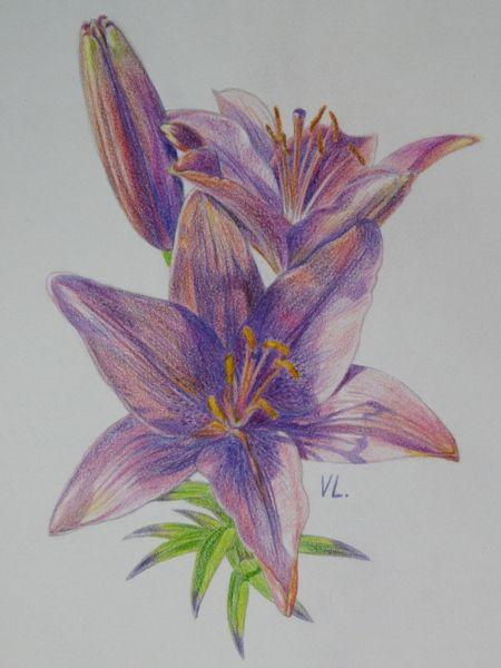 лилии карандашом | Рисунки, Уроки рисования, Краска