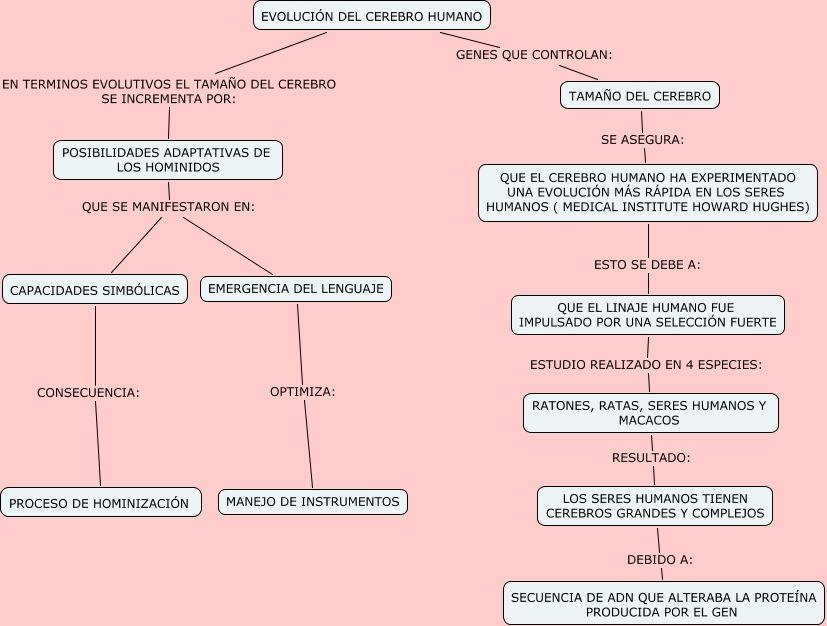 Esquema de la evolución del craneo. | El linaje humano | Pinterest ...