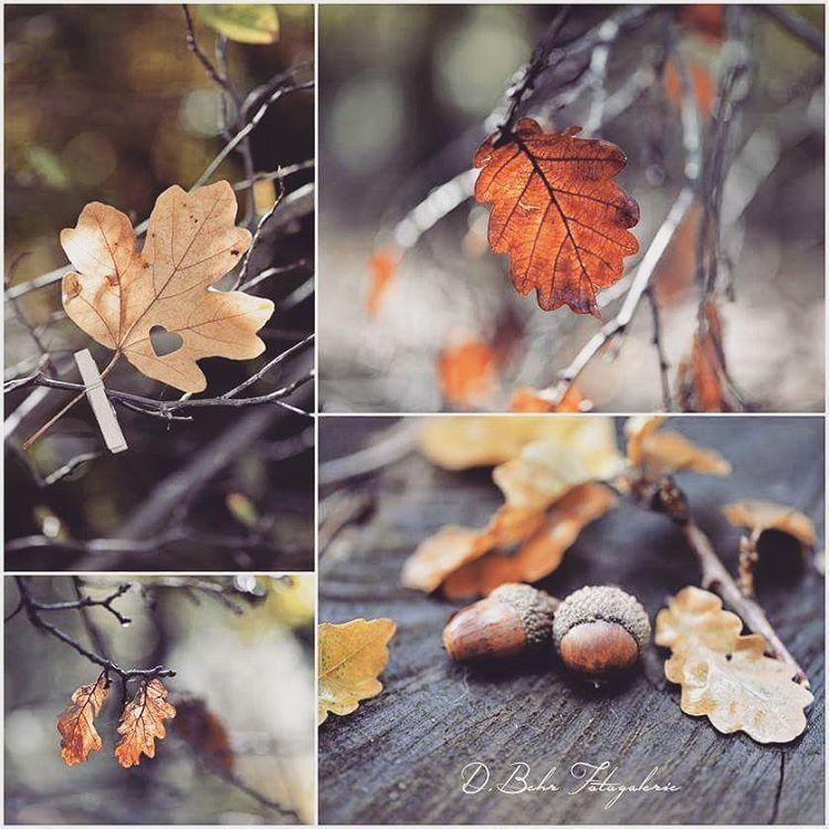 Autumn shows us how beautiful it is to let things go 🍁🎃🍂Schönen Sonntag...happy Sunday 🍁#Autumn #iloveautumn #ichliebedenherbst #Herbst #herbstlaub #autumncolors  #herbstlaubfärbung #blätter #autumnleaves #collage