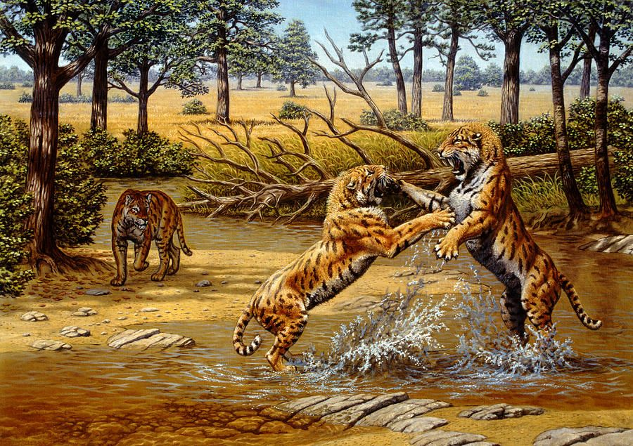 Sabre-toothed Cat Chasing Prey Photographic Print by Mauricio ...