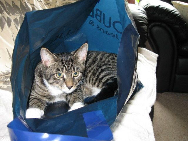 Pictures of Bag Cats