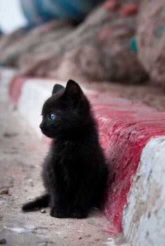 Kitten Kittens Cutest Kittens Cute Animals
