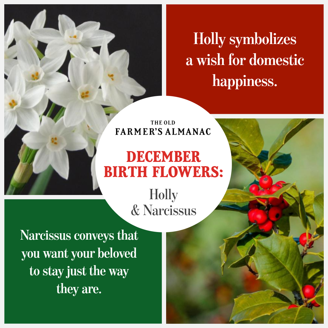 December Birth Flowers Birth flowers, December birth
