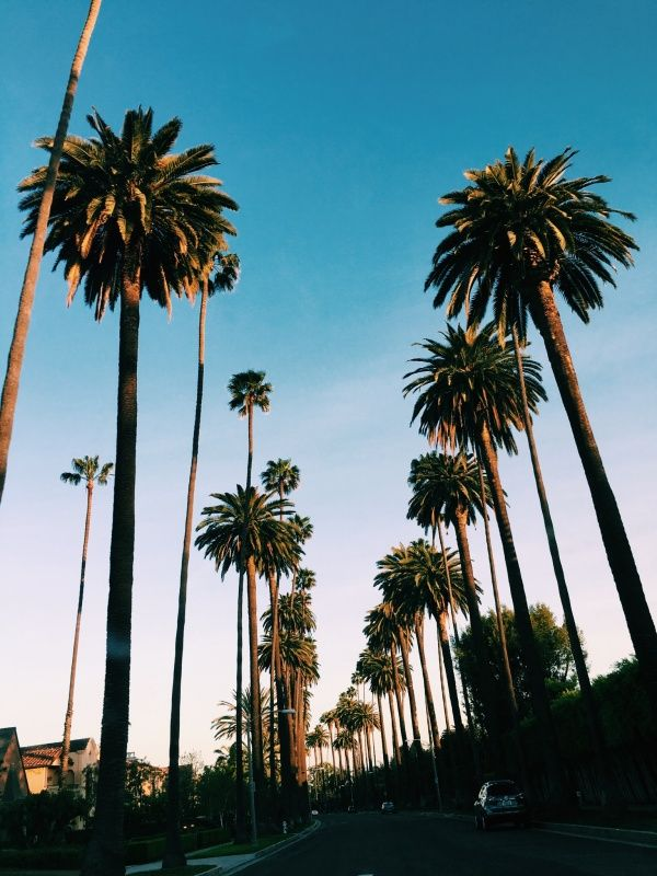 Los Angeles Luciacostello Vsco La Trip Cool Backgrounds Cali Life