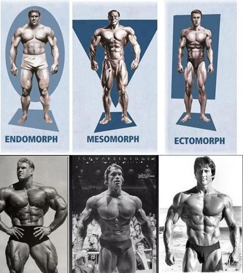 Body Types   SimplyShredded com - Body Building Forum   Page