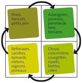 La rotation des cultures de l gumes au potager rotation - Association des legumes au potager ...