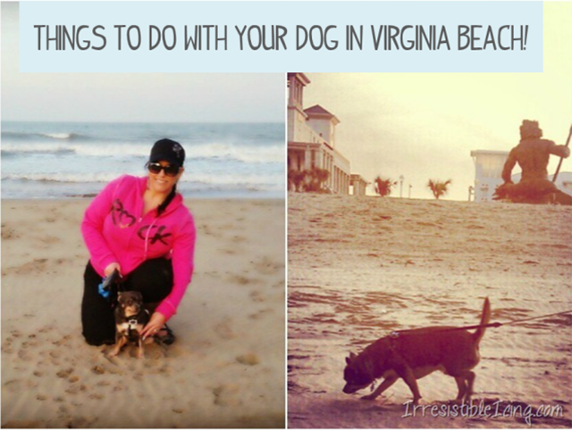 Things To Do With Your Dog In Virginia Beach Dog Friendly Vacation Dog Beach Virginia Beach Travel
