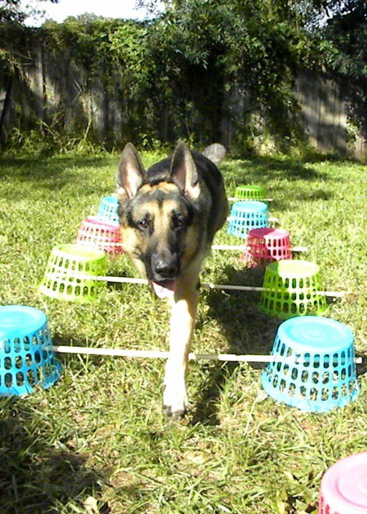 Diy cavaletti dog playground dog training dog exercise
