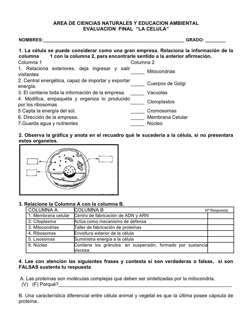 Evaluacion 1 La Celula By Carlos Aguiar Via Slideshare